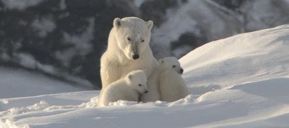 Arctic_Circle_1
