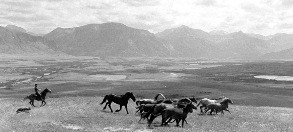 Ride 'em, cowboy! Check out 5 films about the Wild West