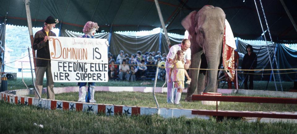 High Grass Circus: low-tech, grassroots entertainment