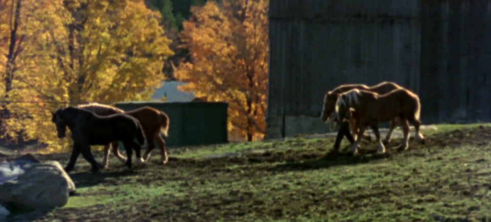 Watch 5 autumn films and celebrate the harvest season in style