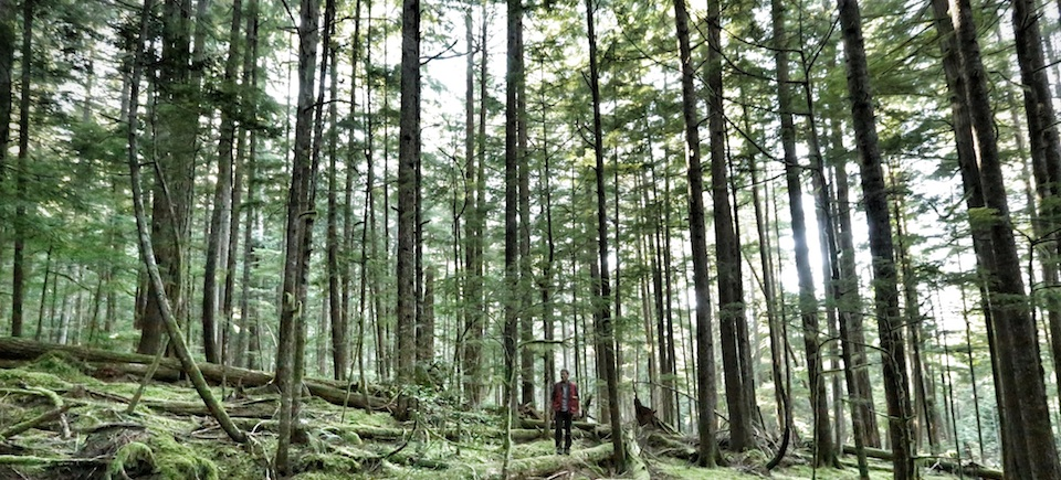 Hadwin's Judgement Premieres April 27 at Hot Docs