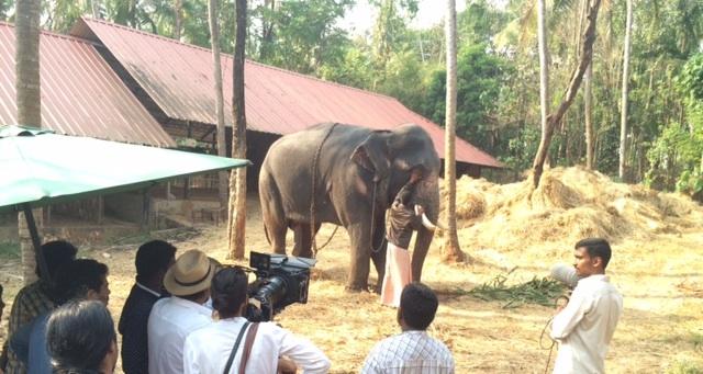 Elephant 67_select