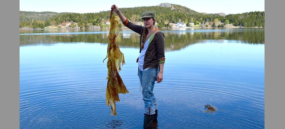 Interactive Gets Fresh: Newfoundland's Local Food Scene
