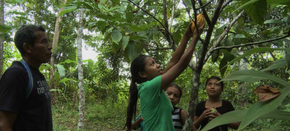 How to Grow Cacao Trees, A Family Succession