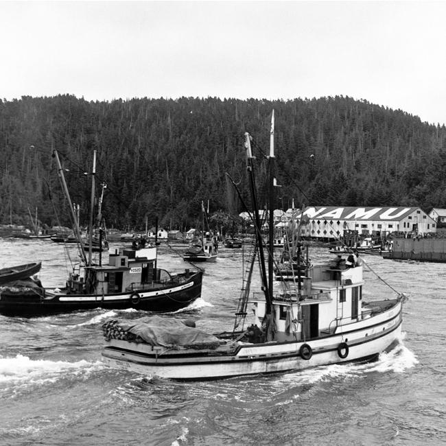 herring-02