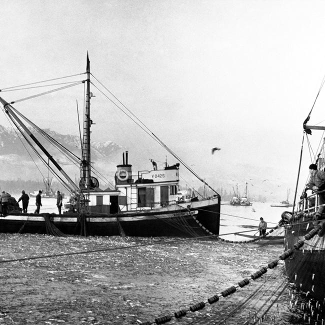 herring-03
