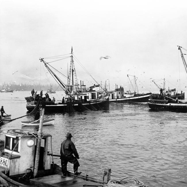 herring_01