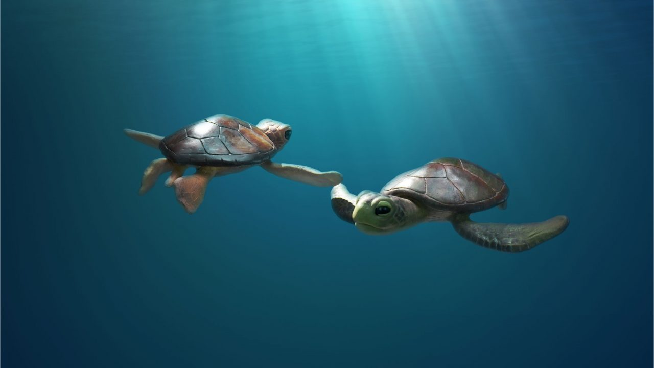 Mini-Lesson for A Sea Turtle's Story