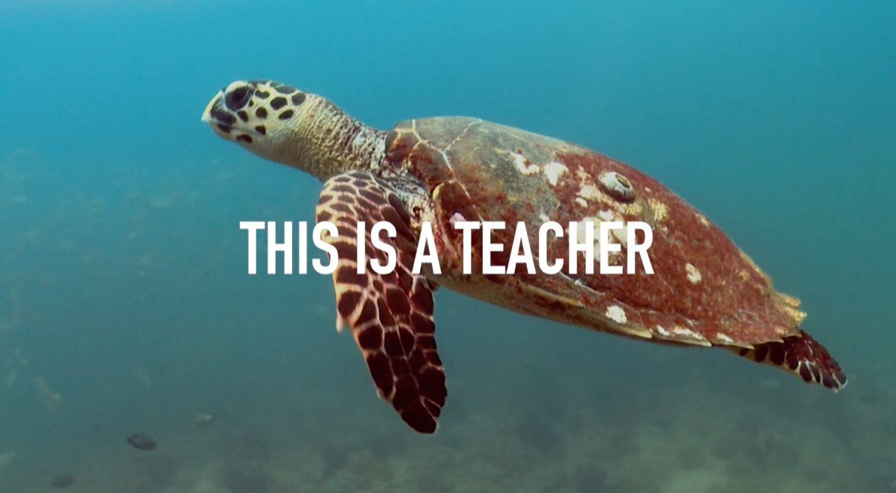Ocean School | Immerse Yourself in Learning