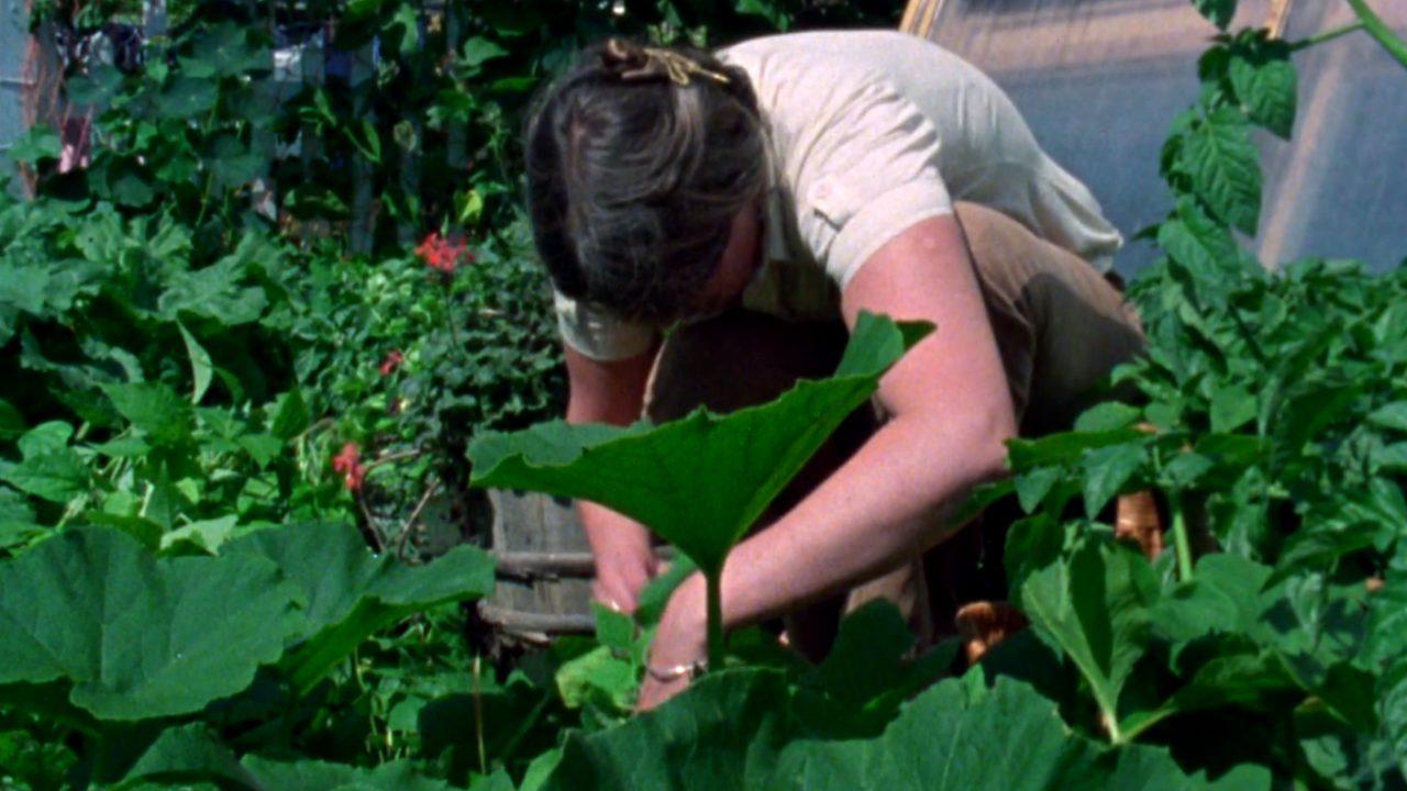 Urban Gardening 101 | Curator's Perspective